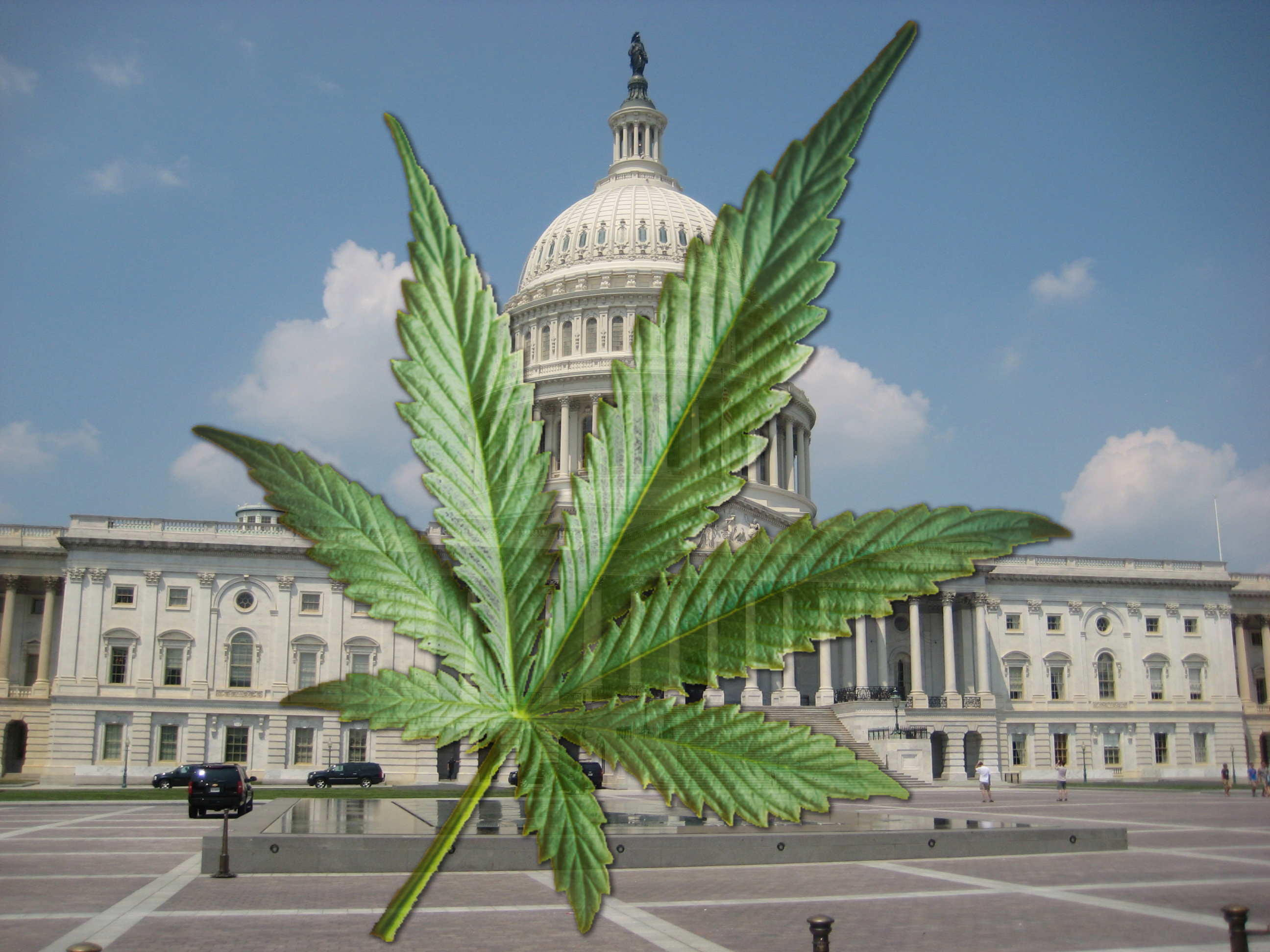 Cannabis and the Political Class
