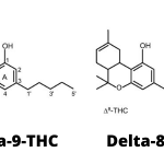 Delta 8 THC: Super-legal Cannabis?