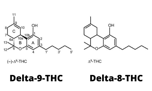 Delta 8 THC: Super-legal Cannabis?